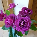 写真: 140502-1 紫のバラ