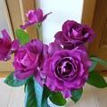 Photos: 140502-1 紫のバラ