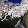 月と桜とお堀