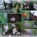 五箇山相倉 合掌集落で見かけた花