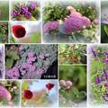 Photos: 我が家の10月の花