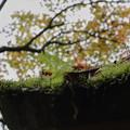 苔と芽吹き