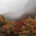 いろは坂 紅葉と霧(1)