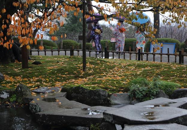 雨の兼六園  紅葉に華