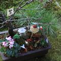 お正月の寄せ植え1