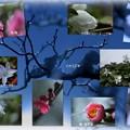 我が家の2月の花(3)
