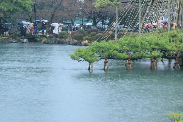雨の兼六園 霞が池と唐崎松