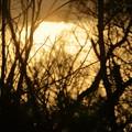 Photos: 健民海浜公園から 木の間から夕焼け