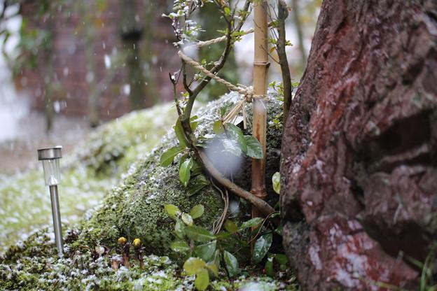 庭に降る雪(1)