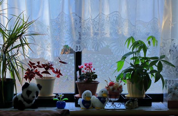 窓辺の植物