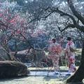 兼六園 梅林の花と華
