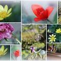 我が家の3月の花(1)