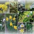 我が家の3月の花 (2)