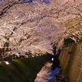 金沢城 ライトアプ お堀の桜(1)