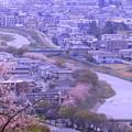 卯辰山から 浅野川の桜並木