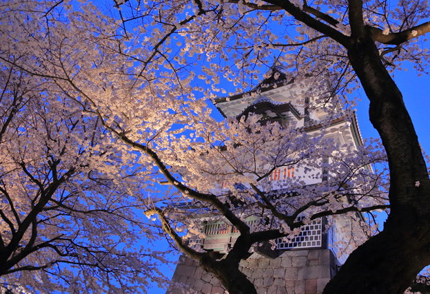 金沢城 菱櫓 満開の桜