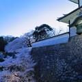 石川門の石垣となまこ塀 満開の桜