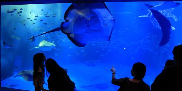 青の世界(3) のとじま水族館 ジンベイザメの館