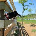 Photos: ヤギの親子 餌ちょうだい!