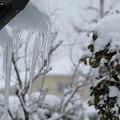 写真: 雪 ツララ