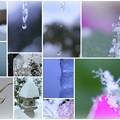 写真: ツララと滴と雪の結晶