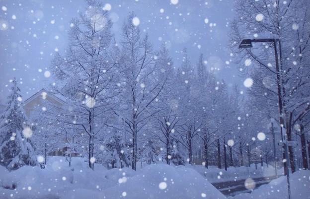 雪のメタセコイア 並木道 画像加工