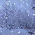 Photos: 雪のメタセコイア 並木道 画像加工