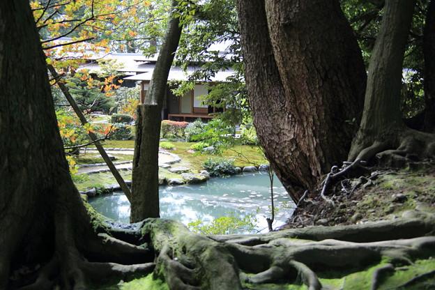 兼六園 時雨亭 庭園と池