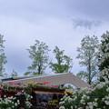 Photos: 花の大谷 となみチューリップフェア