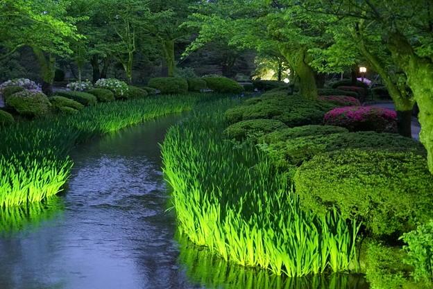 5月の兼六園 新緑に包まれて
