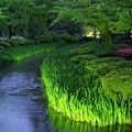 写真: 5月の兼六園 新緑に包まれて