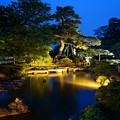 Photos: 5月の兼六園 ライトアップ 曲水とカモ