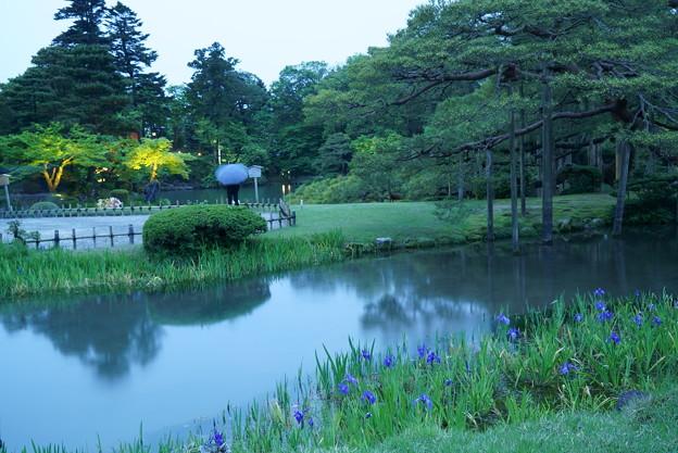写真: 夕暮れの兼六園 カキツバタ
