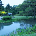 Photos: 夕暮れの兼六園 カキツバタ