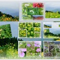 Photos: 白山高山植物園