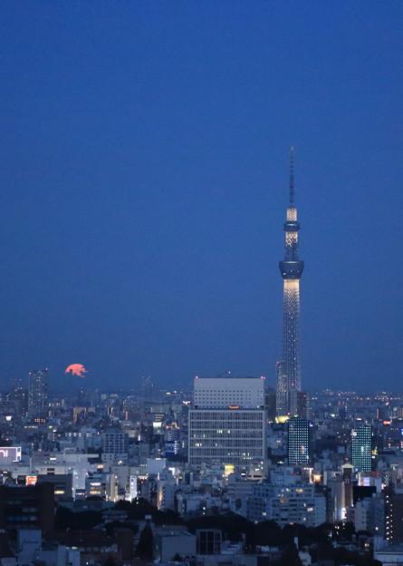 東京都 文京区役所から 東京スカイツリーと満月 月の出(2)