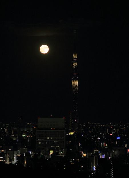 写真: 東京都 文京区役所から 東京スカイツリーと満月(1)