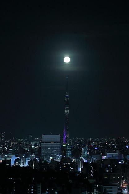 東京都 文京区役所から 東京スカイツリーと満月(2)