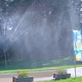 Photos: ヽ`、ヽ`ヽヽ`、ヽ`シャワー♪