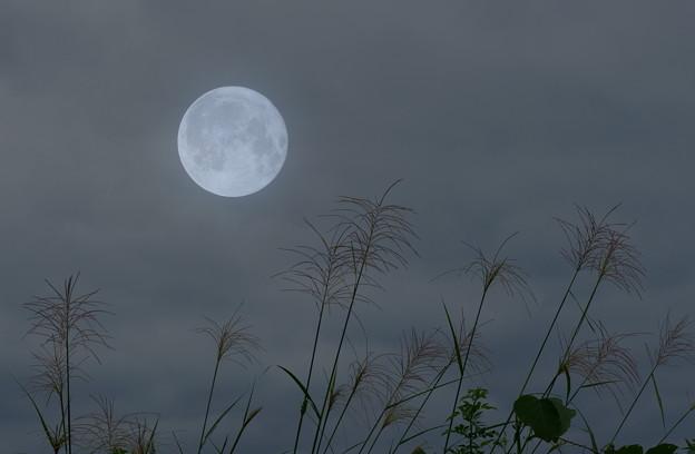 ススキと満月