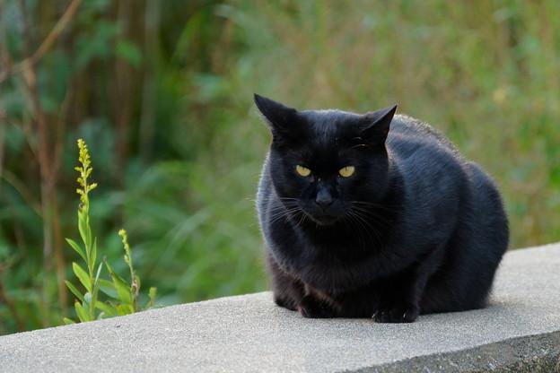 黒猫 =^_^=(1)