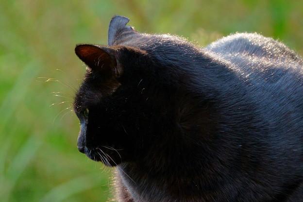 黒猫ちゃん アップで