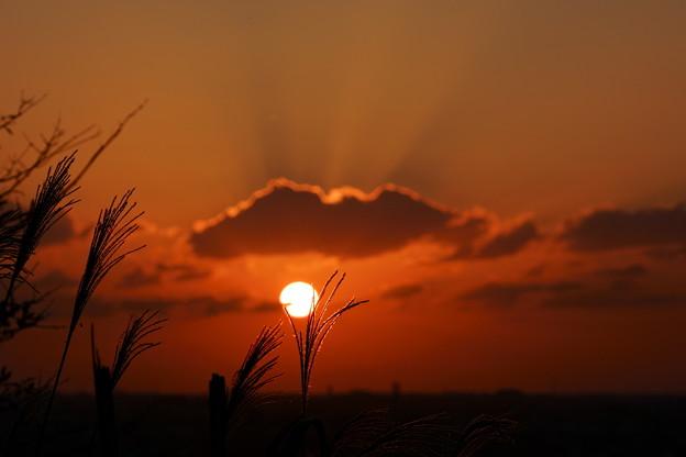 夕日とススキ(2)