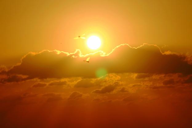 夕日ととんぼ