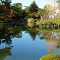 写真: 兼六園 紅葉と唐崎松の雪吊り