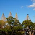 Photos: 唐崎松の雪吊り 作業中