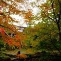 鶴仙渓(山中温泉)さくら公園