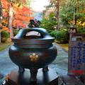 写真: 天徳院 玉姫の寺(2)
