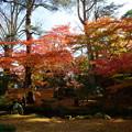 兼六園 モミジの紅葉と落ち葉の絨毯