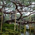 元旦の兼六園 お花松  日本武尊の像の両横に
